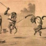 Maimute care se bat